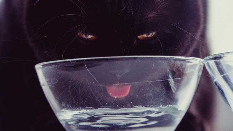 Если рацион котика состоит из сухих кормов, количество выпитой воды должно втрое превышать его объём