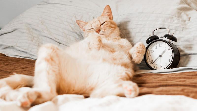 Распространённое мнение о том, что кошки спят две трети жизни, не совсем верно